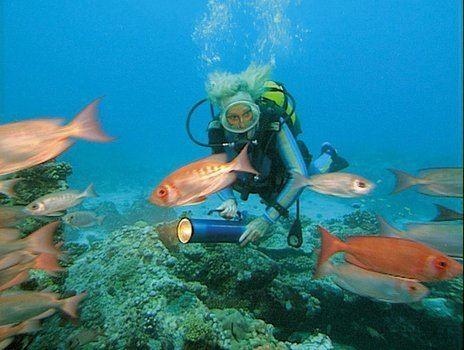 Impressionen unter Wasser Impressionen unter Wasser DVD oder Bluray leihen VIDEOBUSTERde