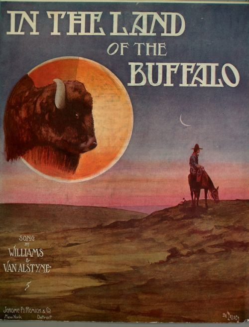 In the Land of the Buffalo
