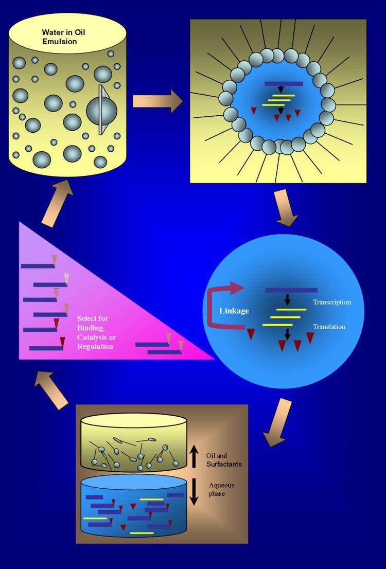 In vitro compartmentalization