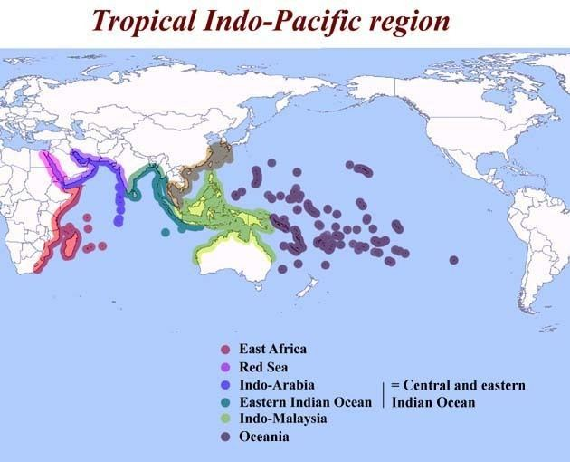 Indo-Pacific IndoPacific Molluscan Species Database at The Academy of Natural