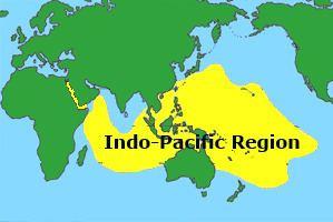 Indo-Pacific IndoPacific Coral Reefs Types Characteristics Biodiversity