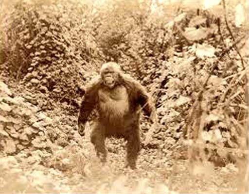 Ingagi Ingagi 1931