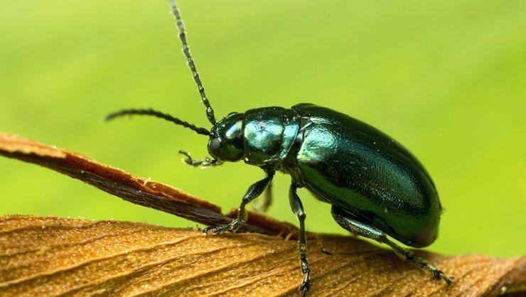 Insect 10 Most Destructive Garden Insects And How To Get Rid Of Them