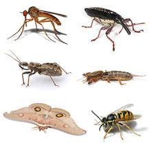 Insect httpsuploadwikimediaorgwikipediacommonsthu