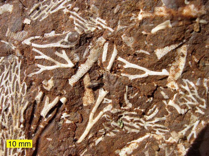 Invertebrate paleontology