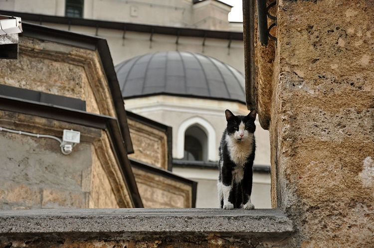 Islam and cats