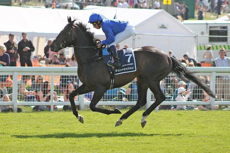 Jack Hobbs (horse)