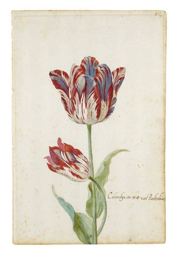 Image result for jacob marrel