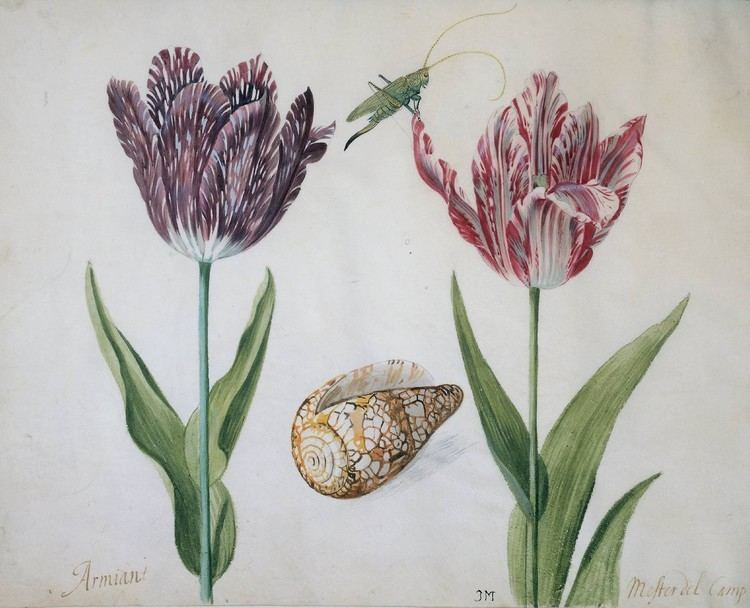 Jacob Marrel Jacob Marrel Wikipedia the free encyclopedia