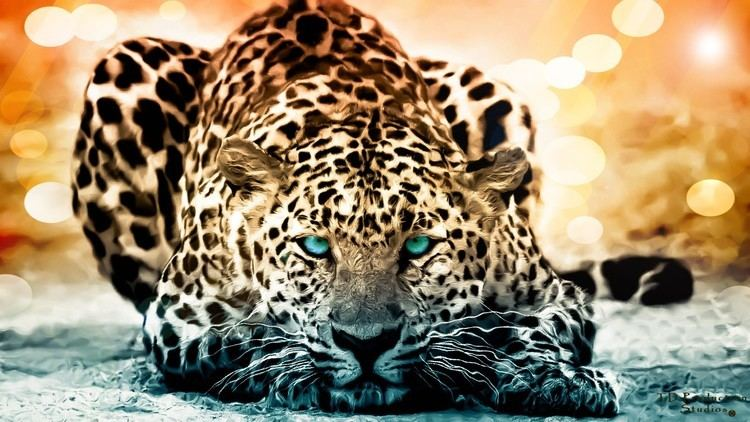 Jaguar 189 Jaguar HD Wallpapers Backgrounds Wallpaper Abyss
