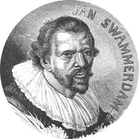 Jan Swammerdam wwwjanswammerdamorgImagesJSjpg