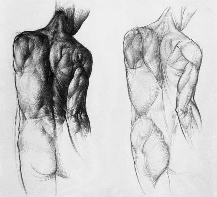 Großzügig Anatomie Studie Für Künstler Ideen - Anatomie Ideen ...
