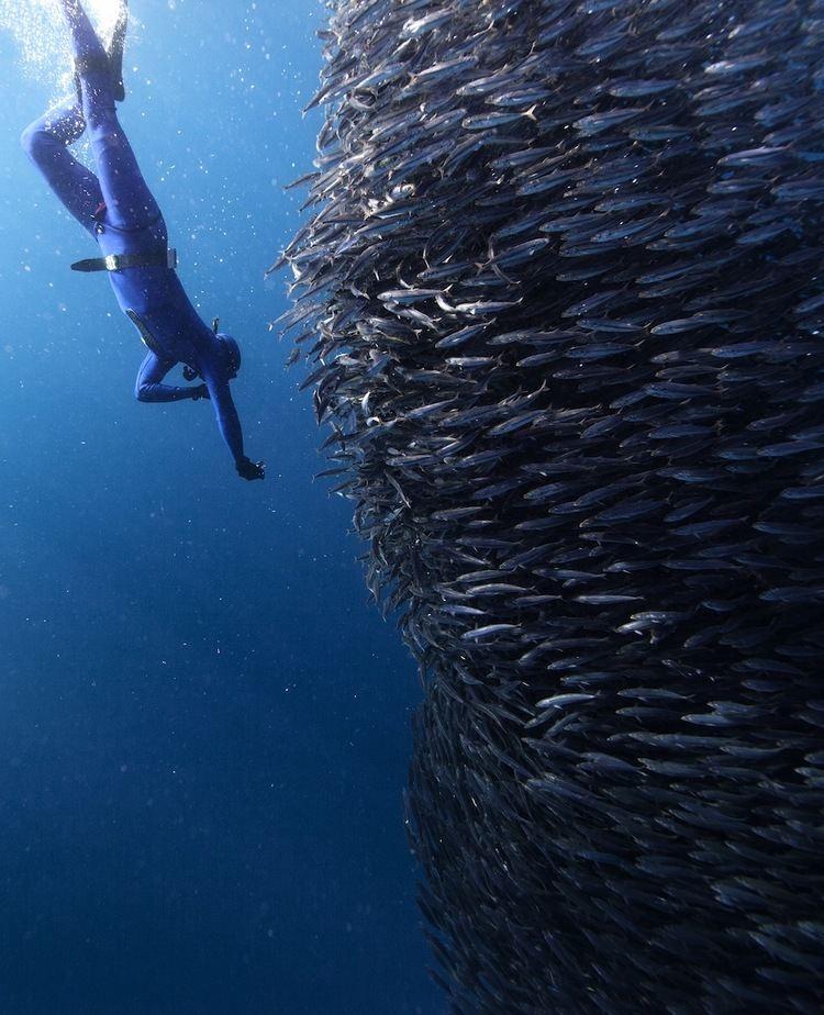 Jorge Cervera Hauser Photographer Jorge Cervera Hauser Captures Sea Creatures