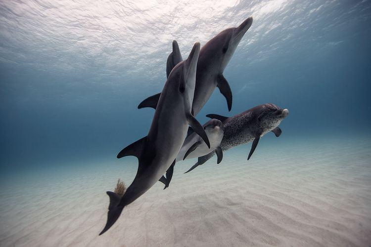 Jorge Cervera Hauser Underwater Photography by Jorge Cervera Hauser