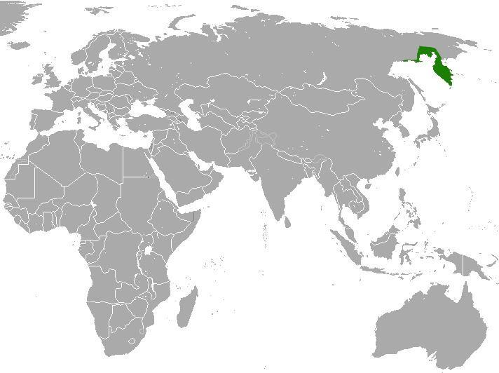 Kamchatka shrew