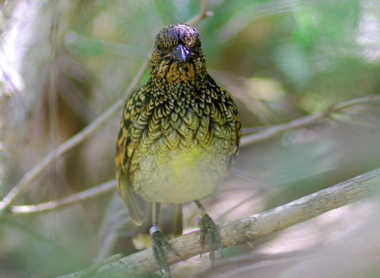 Karara and Lochada Important Bird Area