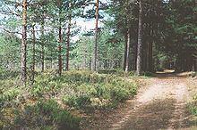 Karelian Isthmus httpsuploadwikimediaorgwikipediacommonsthu