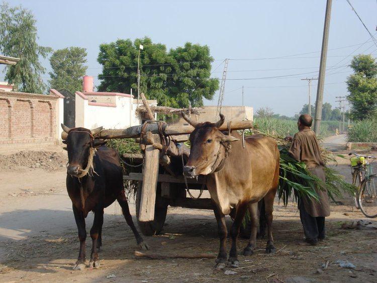 Karimpur Culture of Karimpur