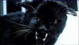 Kellas cat Is the Kellas Cat Scotland39s own Black Panther