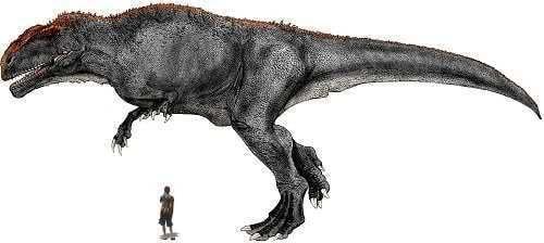 Kelmayisaurus The Forgotten Giant Dinosaurs Forum