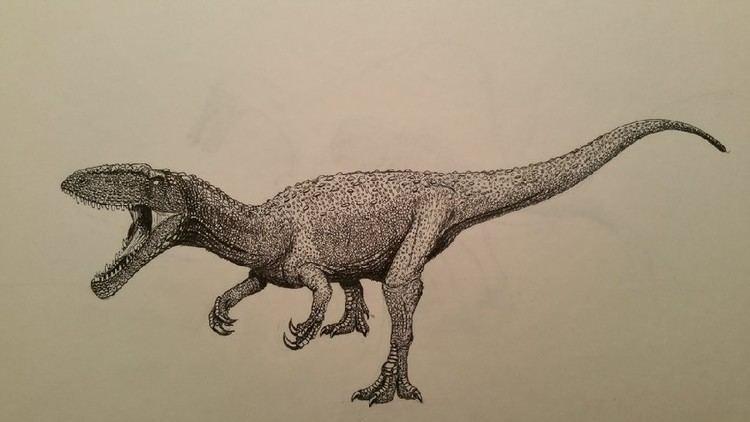 Kelmayisaurus Kelmayisaurus Pictures amp Facts The Dinosaur Database