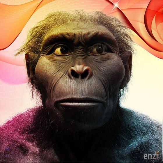 Kenyanthropus Kenyanthropus platyops Enzi