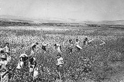 Kibbutz httpsuploadwikimediaorgwikipediacommonsthu