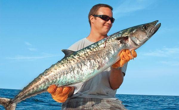 King mackerel Kings of Virginia Salt Water Sportsman