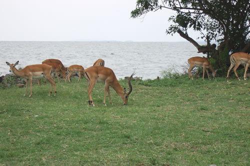 Kisumu Impala Sanctuary Kisumu Impala Sanctuary