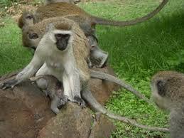 Image result for Kisumu Impala Sanctuary