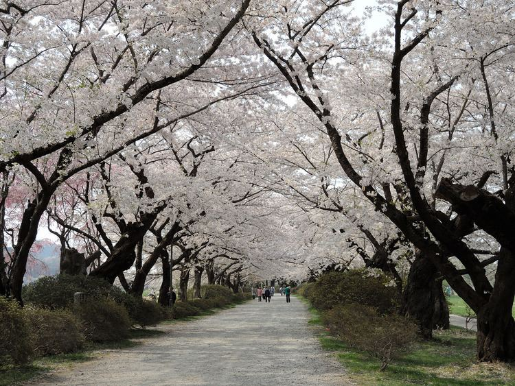 Kitakami, Iwate Beautiful Landscapes of Kitakami, Iwate