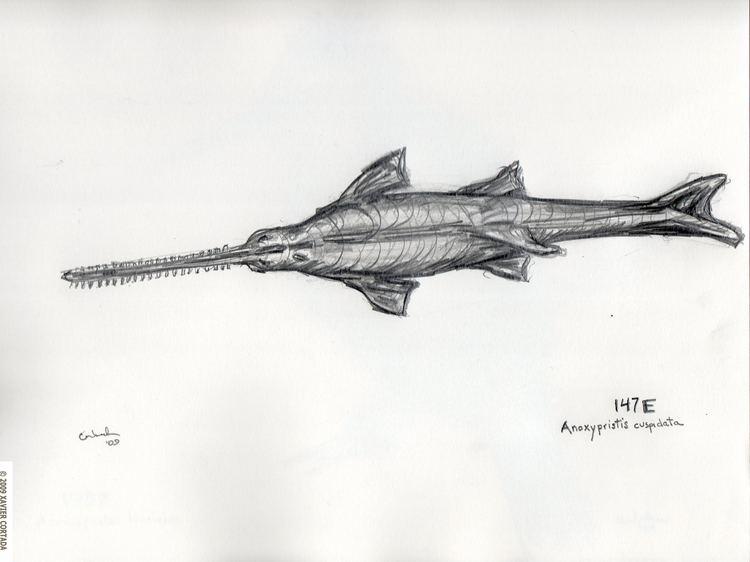 Knifetooth sawfish Endangered World 147E Longitude Xavier Cortada Participatory Art