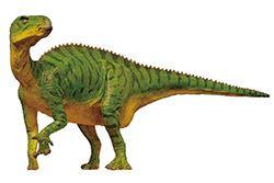 Koshisaurus FPDM Dinosaur Catalog Koshisaurus katsuyama