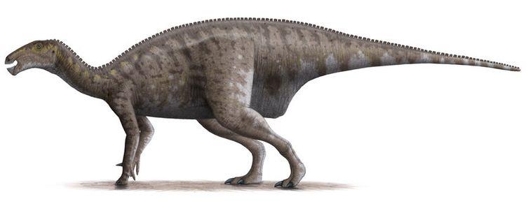 Koshisaurus Koshisaurus katsuyama nov ornitopod z Japonska Wild Prehistory esko