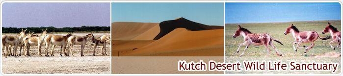 Kutch Desert Wildlife Sanctuary NRI Division About Gujarat Places of Interest Wildlife Kutch