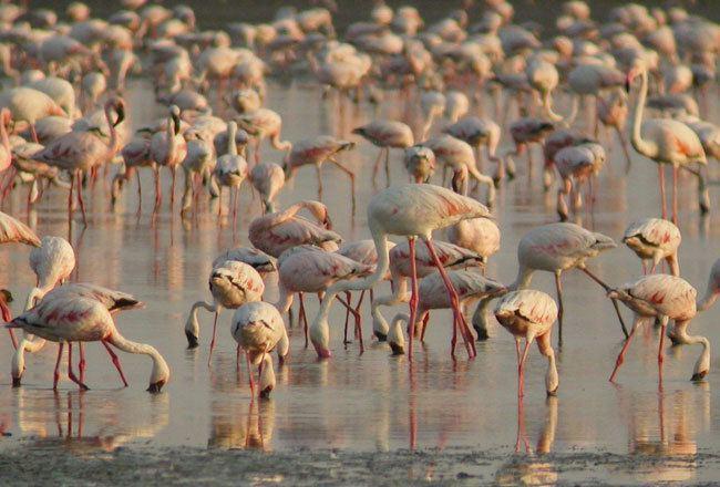 Kutch Desert Wildlife Sanctuary httpswwwindianholidaycomphotogallerygujara