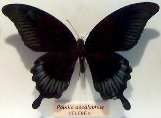La Mariposa Negra LifeTime La mariposa negra