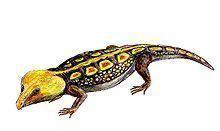 Labidosaurus httpsuploadwikimediaorgwikipediacommonsthu
