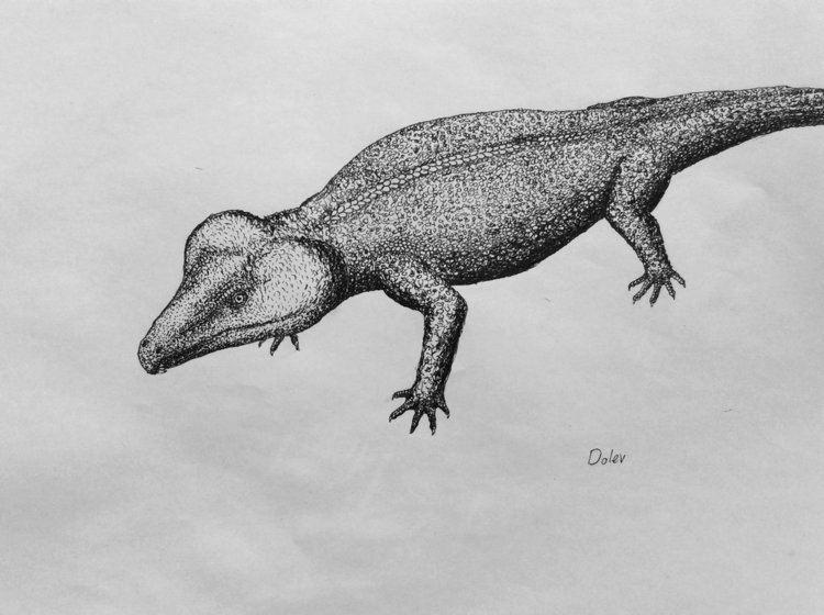 Labidosaurus Labidosaurus by dolevfab on DeviantArt