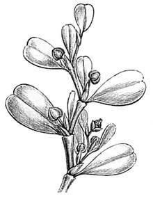 Lactoris httpsuploadwikimediaorgwikipediacommonsthu