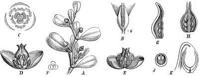 Lactoris Lactoris Wikipedia