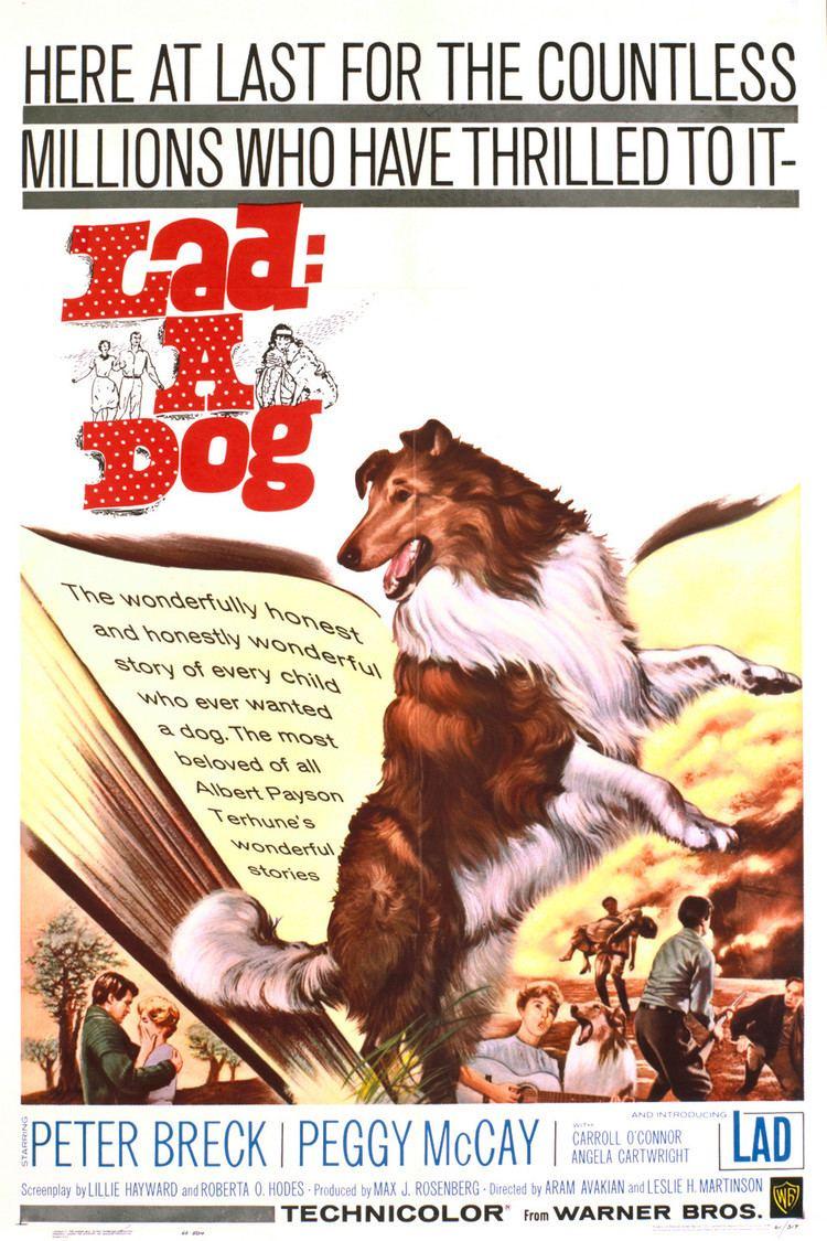 Lad, A Dog (film) wwwgstaticcomtvthumbmovieposters39129p39129