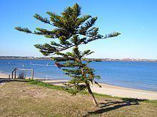 Lady Robinsons Beach httpsuploadwikimediaorgwikipediacommonsthu