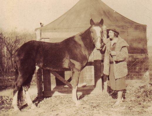 Lady Wonder LADY WONDER THE MIND READING MARE Horse and Man