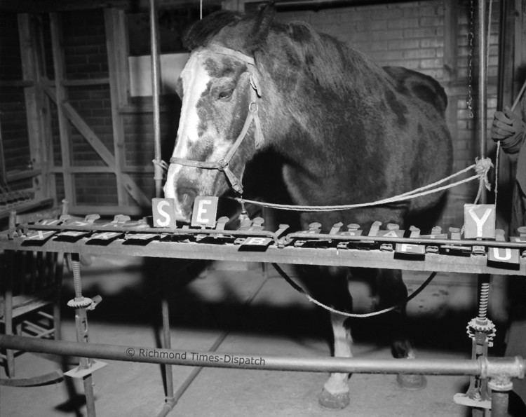 Lady Wonder horseandmancomwpcontentuploads2014020830PO
