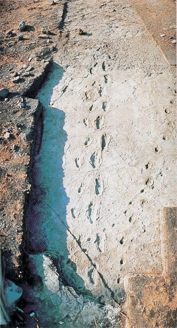 Laetoli Overview of hominid footprints at Laetoli Tanzania from 36 mya