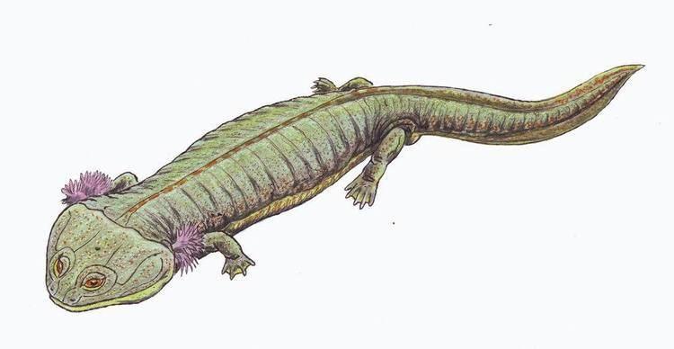 Lafonius