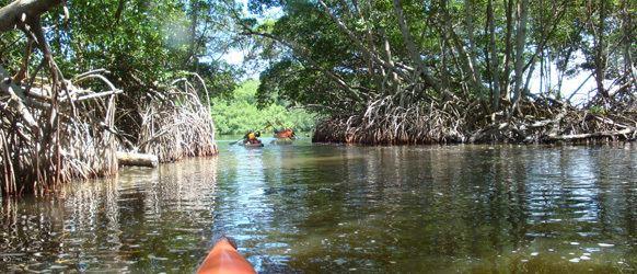 Laguna de Tacarigua Laguna de Tacarigua Kayak Club Venezuela