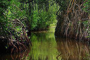Laguna de Tacarigua Laguna de Tacarigua Wikipedia la enciclopedia libre
