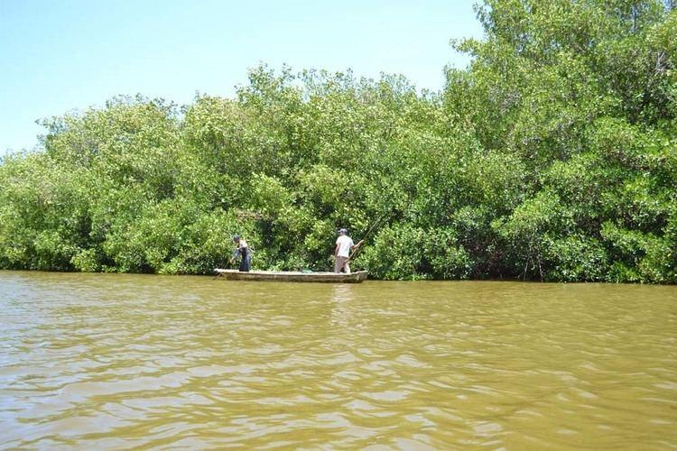 Laguna de Tacarigua Entre manglares y aves la Laguna de Tacarigua una opcin romntica